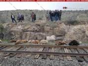 Արագածոտնի մարզում էլեկտրագնացքը բախվել է ոչխարի հոտին. 63 ոչխար սատկել է