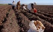 Հայաստանում հեղափոխություն է եղել՝ գյուղացիությունը չի սուբսիդավորվի. «Ժամանակ»