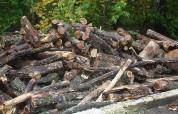 Սեփական սղոցով հատել էր 57 ծառ, ձիով տեղափոխել «Հախոյի գոմեր»-ի տարածքի իր տնակ. վնասի չափ...