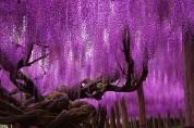 Աշխարհի տարբեր անկյուններում գտնվող այս ծառերի գեղեցկությունն անտարբեր չի թողնի և ոչ ոքի (լուսանկարներ)