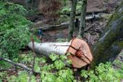 Գեղարքունիքի մարզում ամանորյա տոներին ընդառաջ փշատերեւ ծառեր են կտրվել․ «Ժողովուրդ»