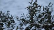 ՀՀ որոշ մարզերում ձյուն է տեղում