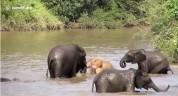 Հազվադեպ հանդիպող վարդագույն փիղ` Հարավաֆրիկյան հանրապետությունում (տեսանյութ)