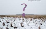 Այս լուսանկարում 550 ոչխար կա. կարո՞ղ եք նրանց գտնել (ֆոտո)