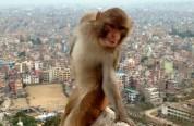 Խցիկի առջև կեցվածք ընդունած կապիկին տիպիկ Instagram-բլոգեր են համարել