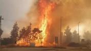 Իսրայելում +50 աստիճան շոգն ամբողջ երկրով մեկ անտառային հրդեհների բռնկման պատճառ է դարձել