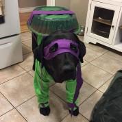 В честь Хэллоуина грустного пса превратили в черепашку-ниндзя «Догателло»