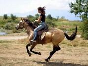 Գնորդը ձիով մտել է մթերային խանութ (տեսանյութ)