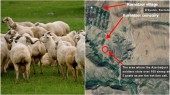 Ադրբեջանցիները հափշտակել են Կոռնիձորի բնակչի պատկանող 107 ոչխար և 5 այ...