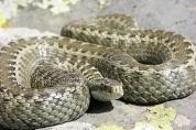 Քաղաքի տարբեր հատվածներում օձեր են հայտնաբերվել