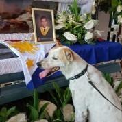 Ֆիլիպիններում շունն օրեր շարունակ չի հեռանում մահացած ուսուցչի դասասենյակի մոտից
