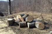 Այգեհովիտ գյուղի բնակիչը ապօրինաբար ծառեր է հատել և փորձել տեղափոխել կեղծ համարանիշերով մե...