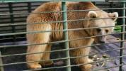 ՀՀ-ում կենդանական աշխարհի պահպանությունը պատշաճ մակարդակի վրա չի․ ՇՄՆ