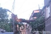 Ծառն ընկել է ավտոճանապարհի երթևեկելի հատված