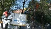 Երևանում մեկնարկել է ծառերի աշնանային էտը. Քաղաքապետարան