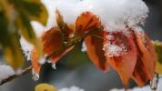 Հոկտեմբերի 22-ի լույս 23-ի գիշերը Արարատյան դաշտում հողի մակերևույթին կանխատեսվում է -5-ից...