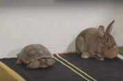 Նապաստակի և կրիայի մրցավազքի տեսանյութը դարձել է Facebook-ի հիթ (տեսանյութ)