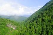 «Դիլիջան ազգային պարկ» ՊՈԱԿ-ի «Հաղարծին տեղամաս»-ում հատվել է 282 ծառ. մեղադրանք է առաջադր...