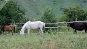 41-ամյա տաշիրցին ձի է գողացել (տեսանյութ)