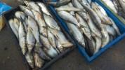 Դեկտեմբերի 1-ից ավարտվում է Սևանա լճում արդյունագործական ձկնորսության որսաշրջանը
