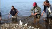 Սեպտեմբերի 1-ից ավարտվում է Սևանա լճում արդյունագործական փորձարարական ձկնորսության որսաշրջ...