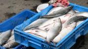 Ովքե՞ր և ինչո՞ւ են «բզբզում» ձկնորսության թեման. «Փաստ»