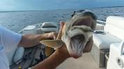 ԱՄՆ-ում հայտնաբերվել է երկբերան ձուկ