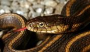 Տներից մեկի բակում նկատվել է օձ