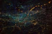Հազարավոր լուսատտիկներ՝ Ճապոնիայի անտառներում (լուսանկարներ)