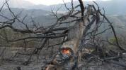 Նոր Երզնկա գյուղում հրդեհ է բռնկվել