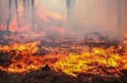 «Դիլիջանի ազգային պարկի» «Ջիլուտ թալա» կոչվող հանդամասի հրդեհը մարվել է. այրվել են մոտ 2,7...