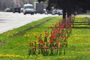2020թ. Երևանում կներդրվեն կանաչապատման համակարգային լուծումներ
