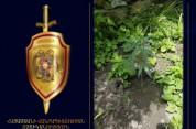 Էրեբունու ոստիկաններն ապօրինի թմրամիջոց են հայտնաբերել (տեսանյութ)