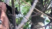 Արտառոց դեպք Սեւան ՔԿՀ-ում. կատվի միջոցով փորձել են թմրանյութ մտցնել քրեակատարողական հիմնա...