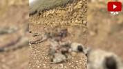 Ադրբեջանական բանակի կորուստները (տեսանյութ)