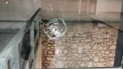Կրակել են Մարսելի «Սուրբ Սահակ և Սուրբ Մեսրոպ» մշակույթի կենտրոնի վրա