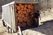 Մուշի ոստիկանները հայտնաբերել են ապօրինի փայտանյութով բարձված բեռնատար