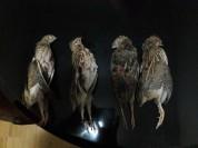 Արարատի մարզի Նոյակերտի տարածքում ապօրինի որսի դեպք է հայտնաբերվել