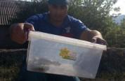 Երևանում օձ է հայտնաբերվել