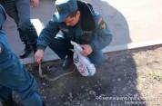 Արմավիրի մարզի Լենուղի գյուղի դպրոցի սենյակներից մեկում օձ է հայտնաբերվել