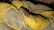 Արցախում օձը մտել է բնակելի շենք․ ԱՀ ԱԻՊԾ-ն հորդորում է զգոն լինել՝ նկատվում է սողունների ...