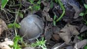 Շոշ համայնքի տնամերձ հողամասերից մեկում հայտնաբերվել է գնդիկաբեկորային ռումբ