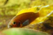 Рыбы научились выяснять отношения, мочась друг на друга