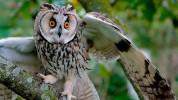 Վորոնեժի կենդանաբանական այգում քնեցրել են բոլոր թռչուններին` գրիպի վտանգից խուսափելու նպատակով (տեսանյութ)