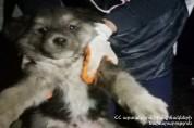 ԱԻՆ աշխատակիցները փրկել են վերելակի հորանն ընկած շանը
