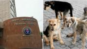 Գյումրիում մի խումբ թափառող շներ հարձակվել են 2.5 տարեկան երեխայի վրա. երեխան «Սուրբ Աստվա...