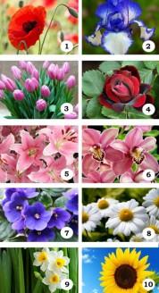 Ընտրեք Ձեր սիրած ծաղիկը և իմացեք ինչ է պատմում այն Ձեր մասին