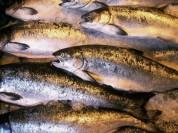Սոչիում այրել են Հայաստանից ներկրված 280 կգ ձուկ