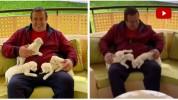 Ալբինոս առյուծի նոր ծնված ձագերը. Գագիկ Ծառուկյան (տեսանյութ)