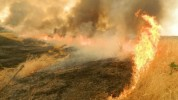 Խոտատարածքից կրակը տարածվել և այրել է Գիշի համայնքի բնակչի գարու արտը